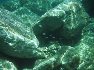 moře a život v něm