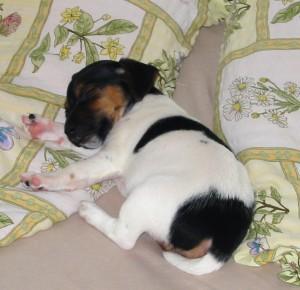 Usnula v posteli