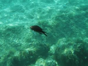 Černa rybka trochu blíž - Orebič